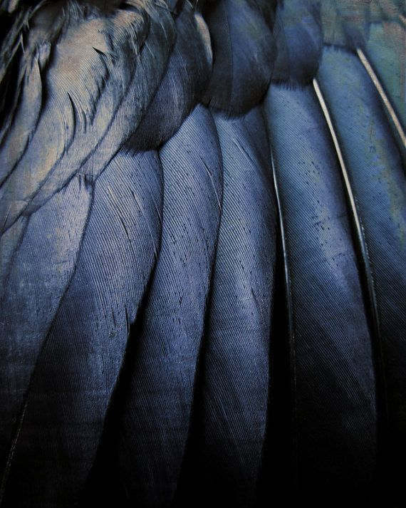 Black wings, feathers, deep colours, petrol blue, close up, detail, indigo, mysterious.