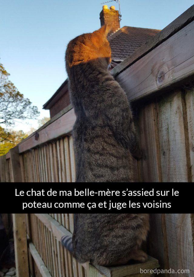 23 photos légendées de chats qui vous feront passer du rire aux larmes (page 4)