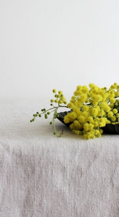 Acacia. Commonly called Wattle. It is from this plant that the green and gold were chosen to be our national colours.