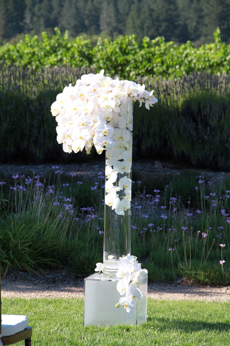 Best images about white orchid wedding on pinterest