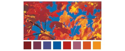 colour scheme: lavendel, bruin en oranje