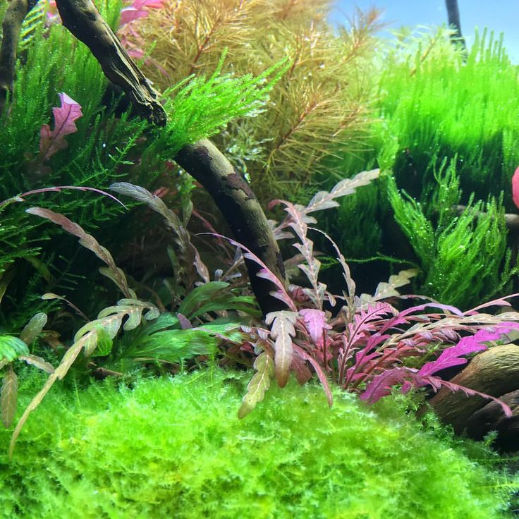 17 Best Ideas About Aquascaping On Pinterest