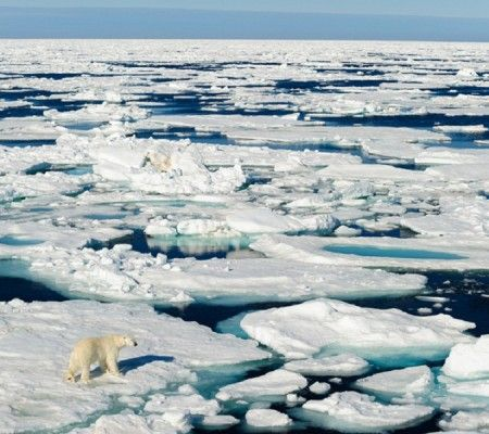 North Pole gets warmer by 20 degrees Celsius | #LittleNews