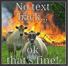 Image result for no text back memes funny