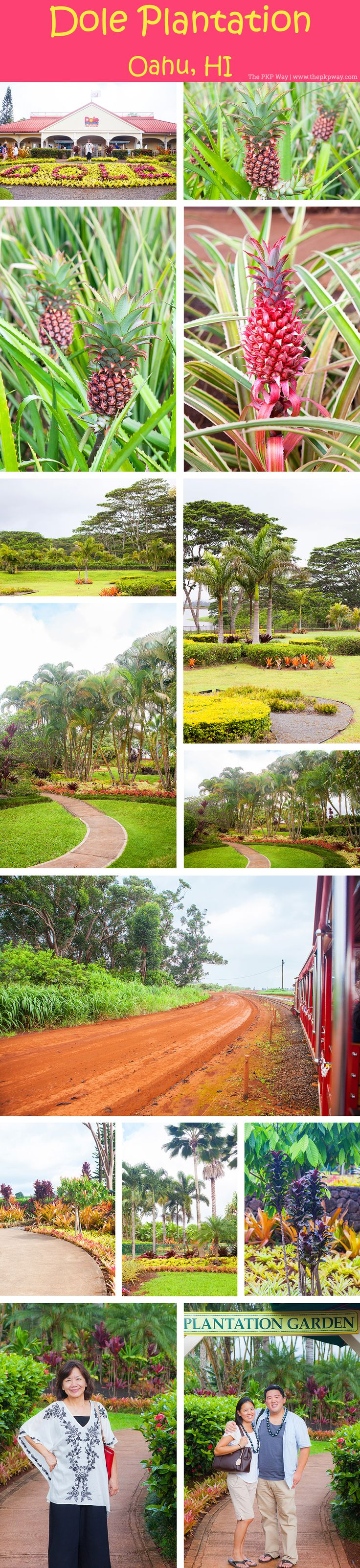 The PKP Way | A Weekend in Oahu, Hawaii | Dole Plantation http://www.thepkpway.com
