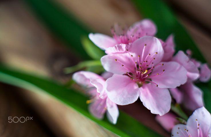 spring flower (Bipozver) - www.bipozver.com