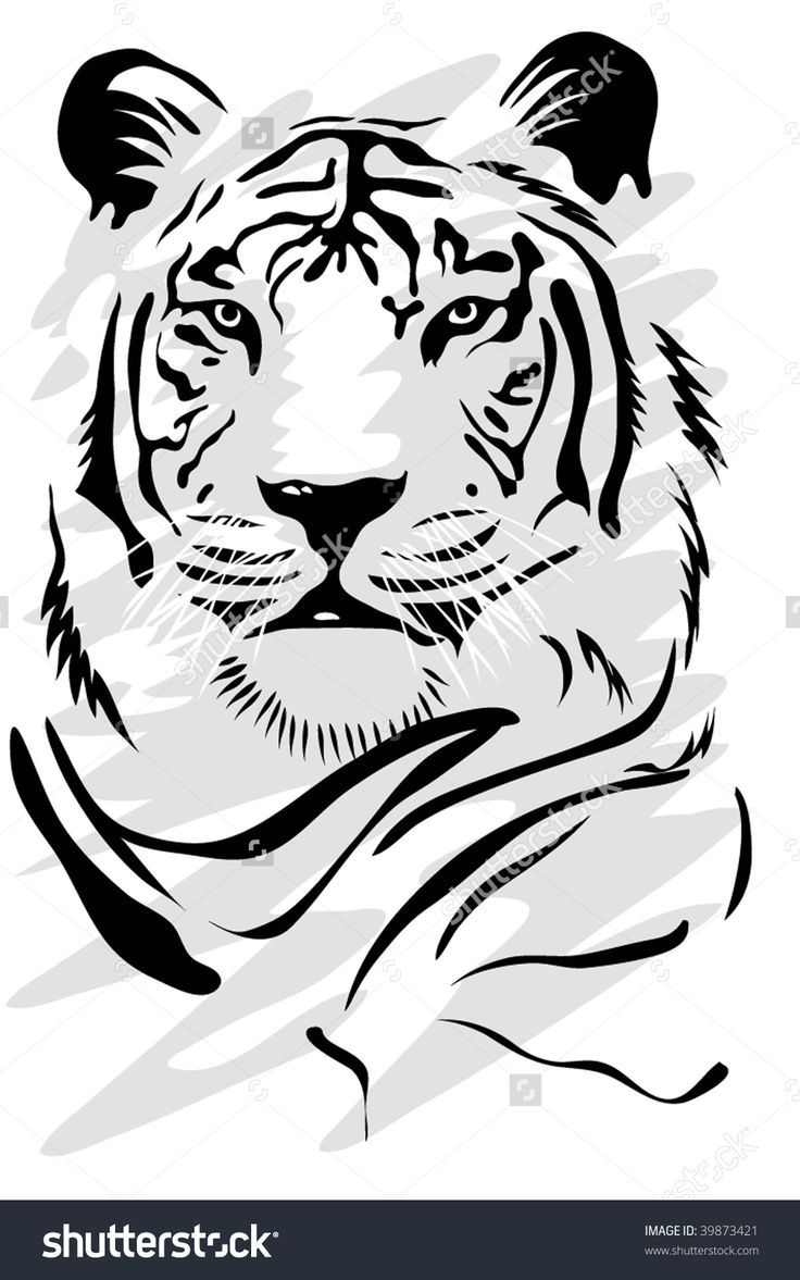 White Tiger Illustration vectorielle libre de droits 39873421 : Shutterstock