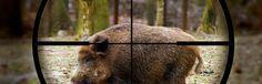 Você realmente sabe caçar? | Sobrevivencialismo