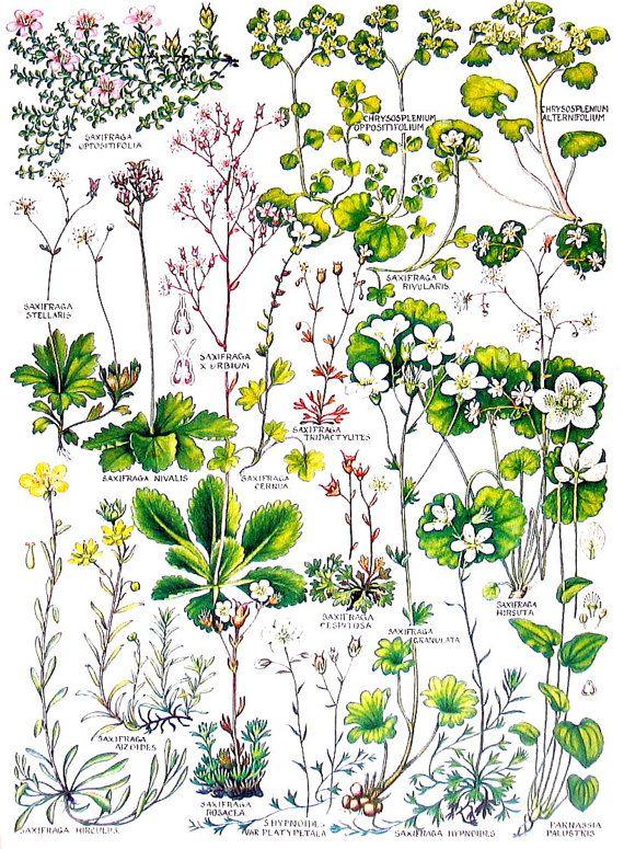 Británicas plantas y flores púrpura por mysunshinevintage en Etsy