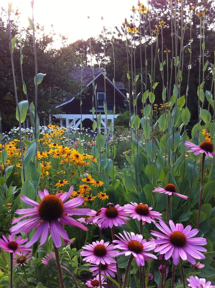 25 best images about corolla on the outer banks on for Outer garden