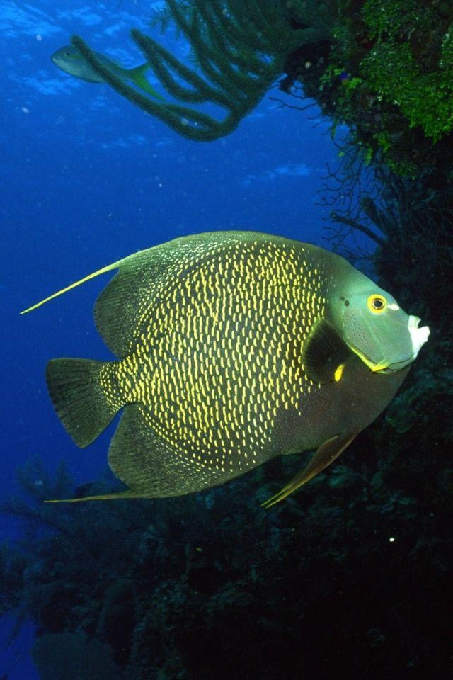 pin lydia alsenoy op earth tropische vissen