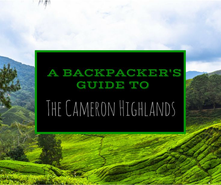 A Backpacker's Guide to the Cameron Highlands, Malaysia | Jones Around The World