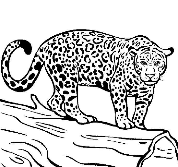 Free Jaguar Coloring Pages | Jaguar colors, Coloring pages ...