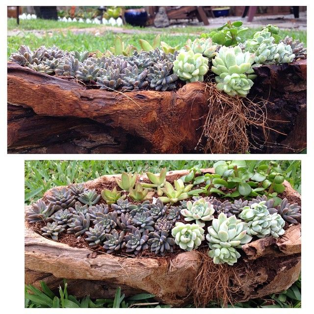 #InstaSize #cocoyjuli #Myplants #succulents #cactus #gardenideas #garden