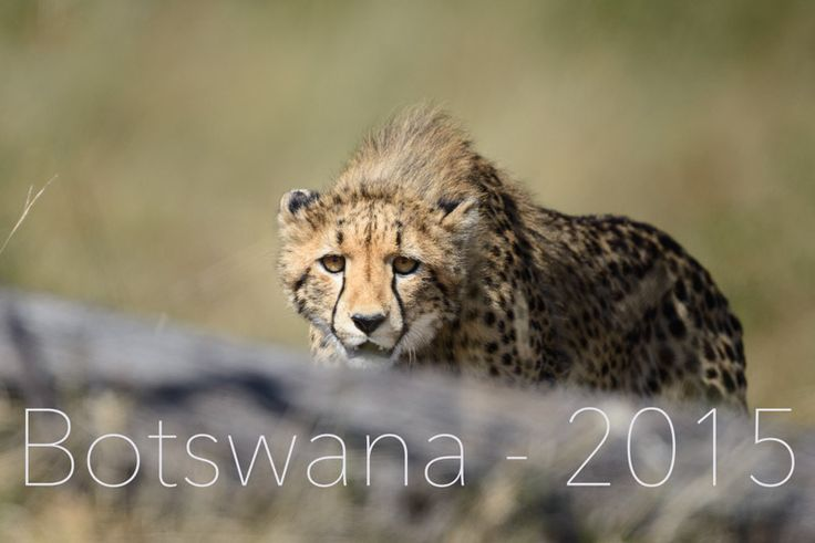 We're going back to Botswana - May 2015 - Can't wait!