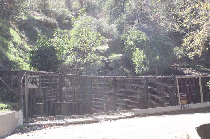 The Abandoned Zoo