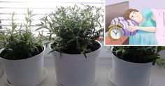 Insonnia: le 5 piante da tenere in camera da letto per dormire meglio.