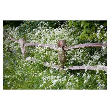 fence with cow parsley   brook cottage garden, cotswolds