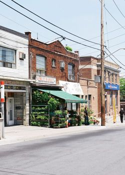 Real Estate Guide: Mimico