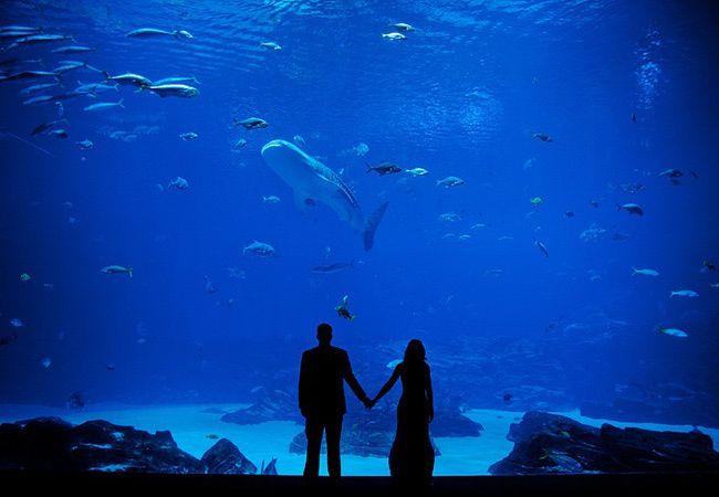 6 Amazing Aquarium Wedding Photos   The Knot Blog – Wedding Dresses, Shoes, & Hairstyle News & Ideas