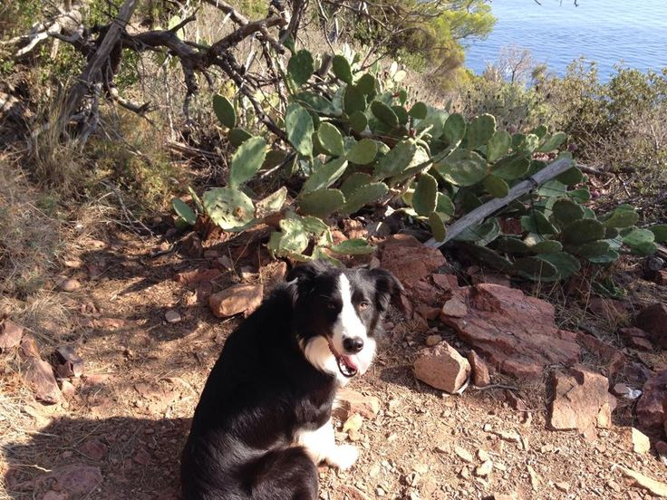 Harley by Teuf C. Border Collie