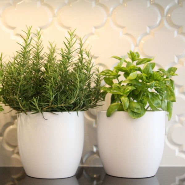 3 Essential Keys for Growing Your Aromatic Herbs Indoor