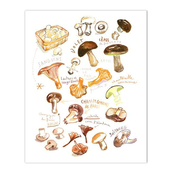"Mushrooms Archival giclee reproduction print from my watercolor illustration. Signed with pencil. Printed on fine art "" BFK Rives "" hot-pressed paper, smooth surface, 140 lb, 100% cotton (acid free ),"