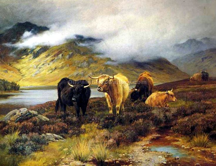 17 Best Images About Cattle Paintings On Pinterest