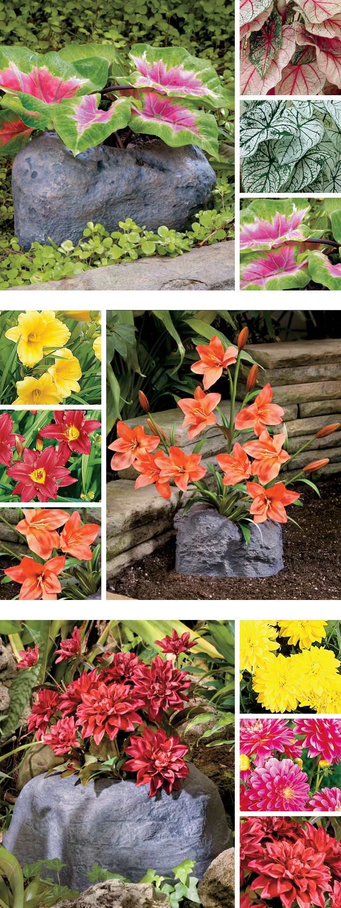 Flowerocks - Decorative rock planters pre-planted with perennial bulbs. Just pull back the seal, place in a sunny spot, and water! Now that's easy gardening!