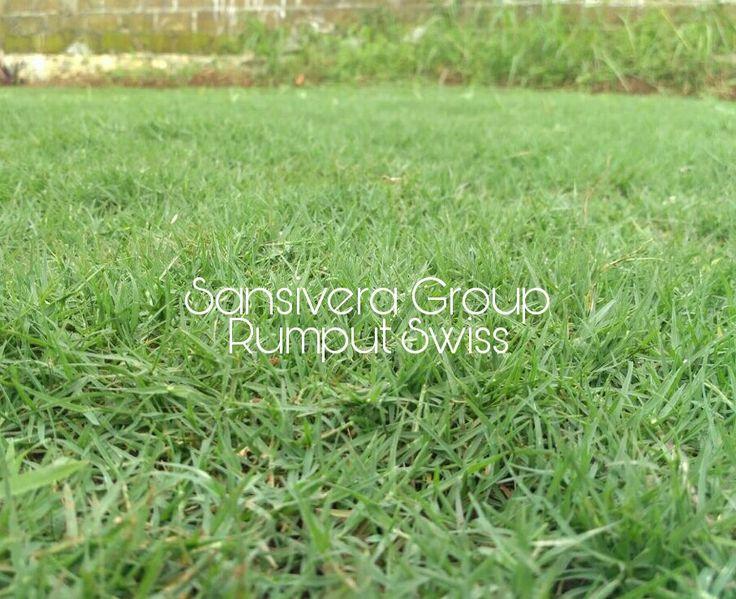 Sansivera Group : Penyedia Jasa, Tukang Taman, Taman minimalis, Pembuatan Taman, Kolam, Tanaman Hias.