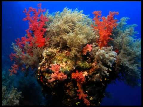 Egyptian Red Sea Dive Spots