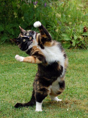 """""""I put my hands up in the air sometimes, sayin' heyo, sayin' heeeyyyooo."""""""