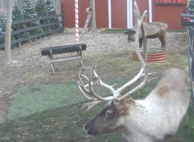 Free Live Reindeer Cam  http://www.thefreebiesource.com/?p=176369