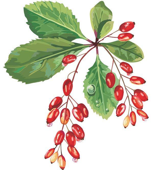 Body Art Quality Henna Whole Foods