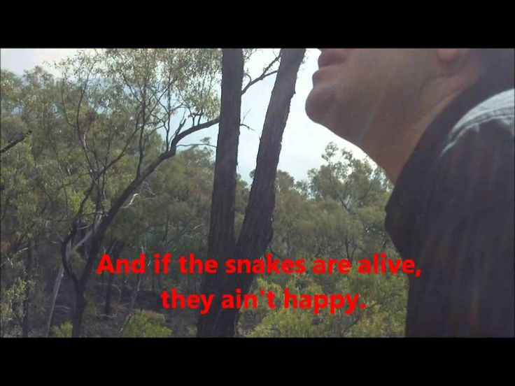 Walking around AFTER a bush fire - safety tips