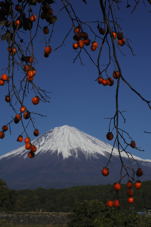 Mt. Fuji and Persimmon, Japan