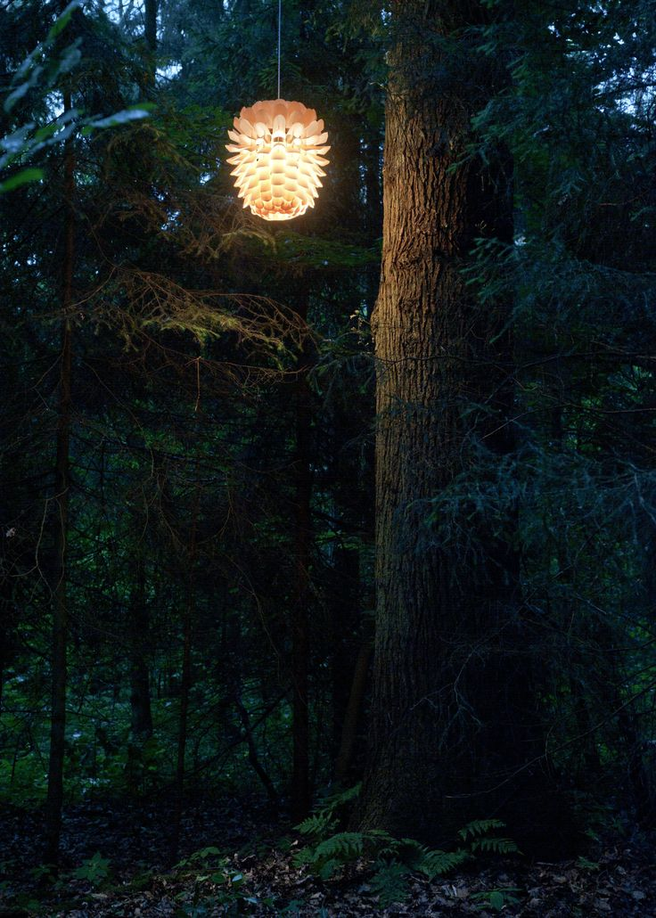 ZAPPY ASH - In forest #wood #lighting #design #object #art