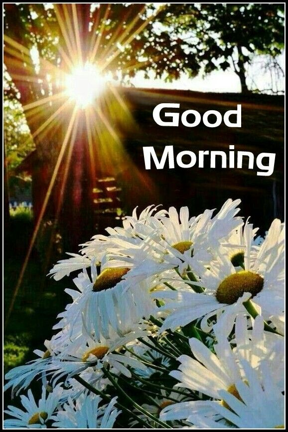 69 best images about Sunny Morning wishes on Pinterest ...