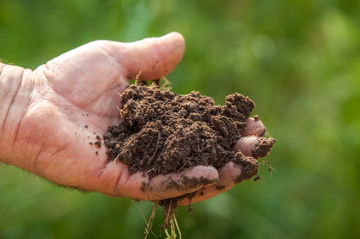 Nuovi mestieri che offre l'agricoltura: ecco quali sono - http://www.wdonna.it/lavoro-agricolura/64310?utm_source=PN&utm_medium=Gossip&utm_campaign=64310