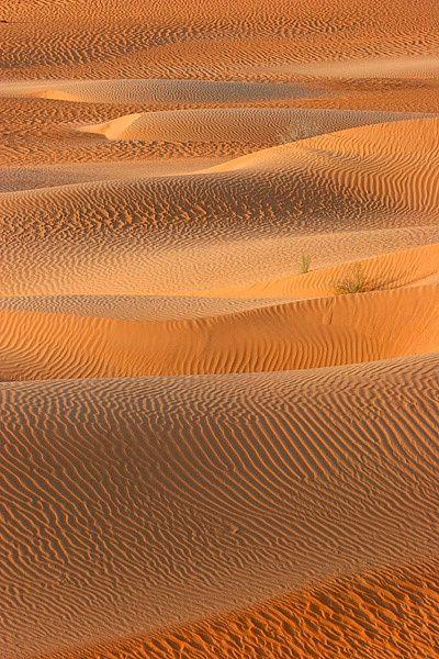 Ripples in Desert-Sand