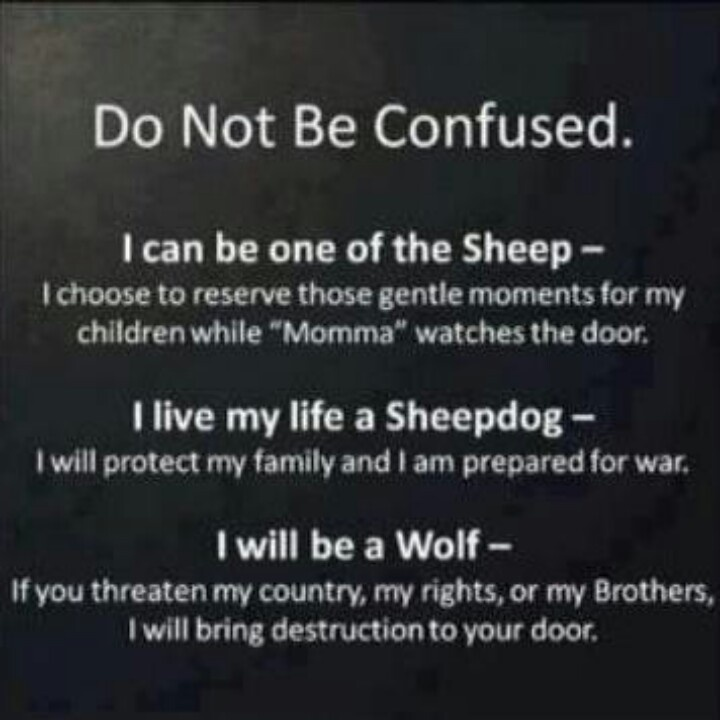 """grossmans essay on wolves and sheepdogs Sheep, wolves, and sheepdogs in saying """"their response to the sheepdog is scorn and disdain"""" grossman refers to how living the wolves essay."""
