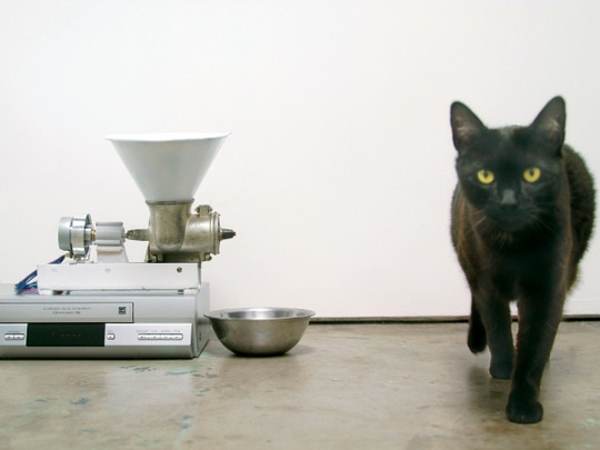 Old Programmable VCR Converted Into Automatic Pet Feeder Make