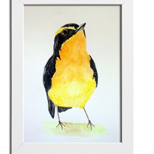 Pajarillo paticorti. . . #watercolorillustration #watercolorart #wasserfarben #kidsillustration #illustration #ilustraciin #colors #bird #instabird #instaart #acuarela #enventa #onsale #vogel #drawing #handmade #handdraw #santiago #chile #ilustradoraschilenas