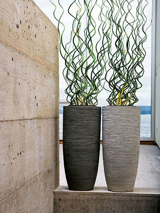 curly in elongated modern pots. Like the curves
