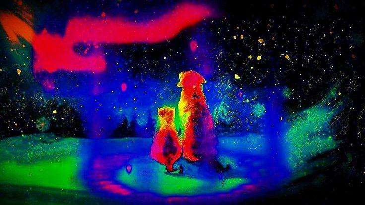 クリスマスの夜に二匹のラブカップルほのぼのしますね!  僕の大好きなクリスマス歌を紹介します。 The Temptations - Silent Night (Gordy Records 1980) http://youtu.be/D0mgk0KgI0Q  デジブック『 クリスマスシーズン 』 http://www.digibook.net/d/3545e3b7b1998a08b9e0aff6ac8afb67/?m