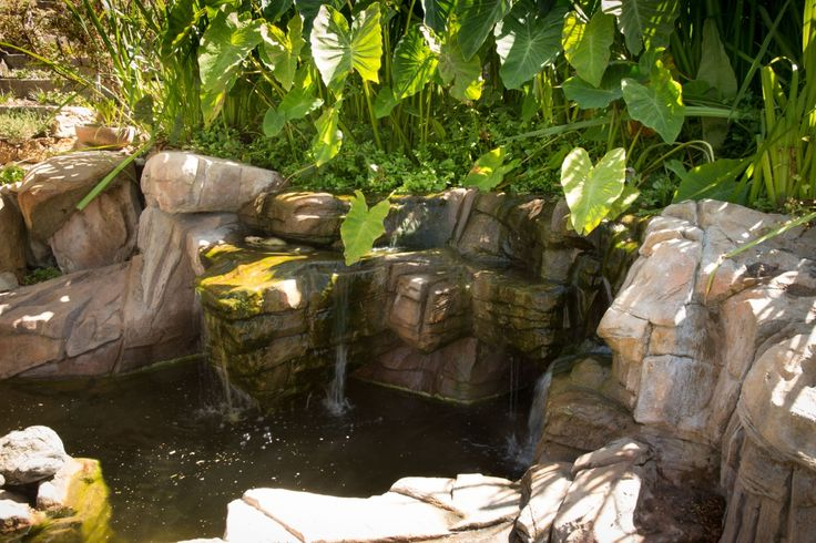 Wetland filtration with waterfall into rockpool