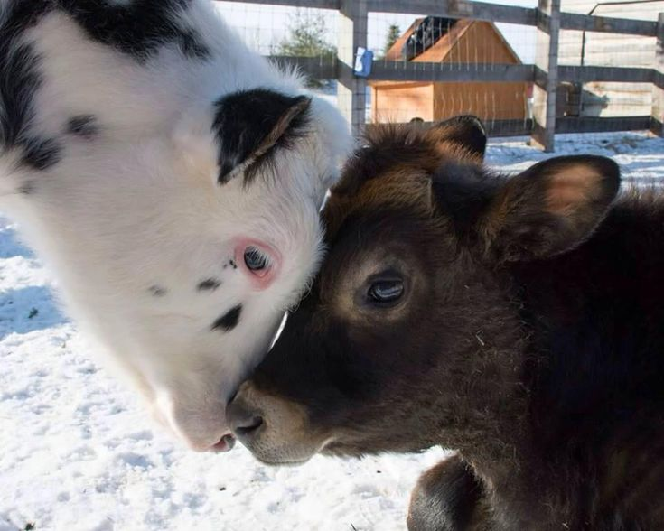 """""""Here at Wishing Well Sanctuary, Bali & Kai provide us with daily reminders of what kindness looks like. We can all learn a lot from these two gentle beings.""""- Wishing Well Sanctuary"""