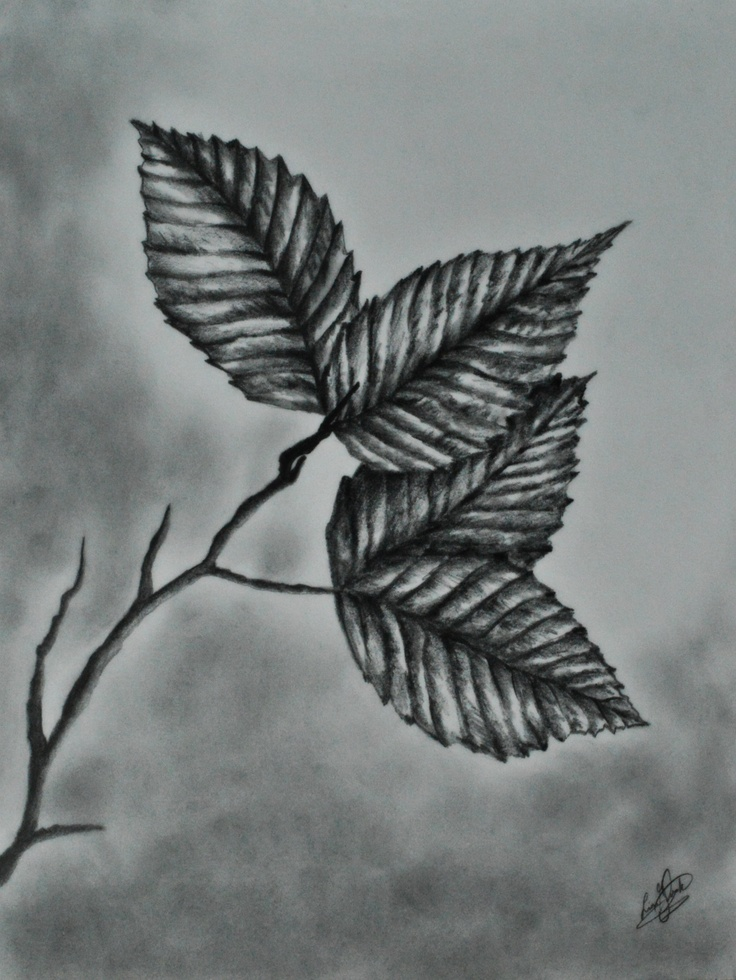 Leaves Art Pinterest Pencil Pencil Drawings And