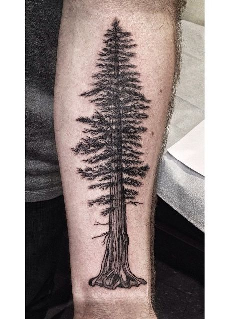 pine tree tattoo i worked on today based off a giant redwood love doing nice illustrative. Black Bedroom Furniture Sets. Home Design Ideas