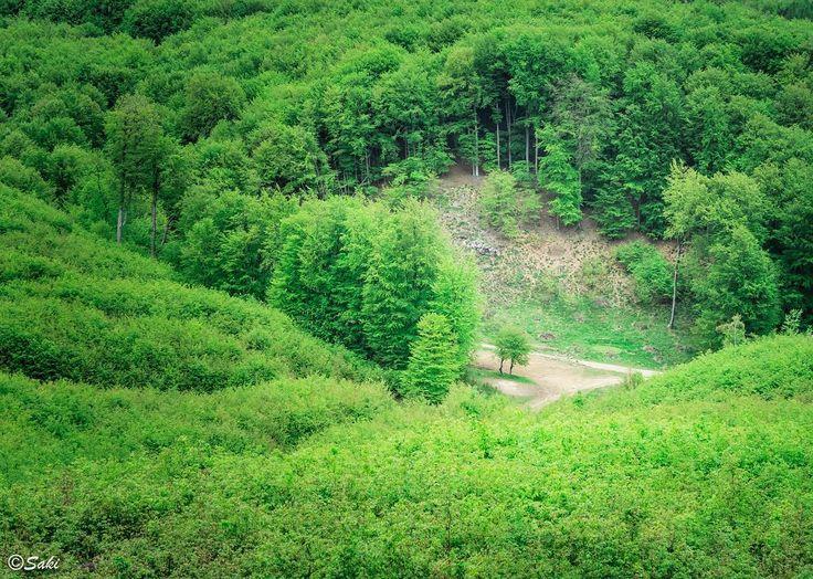 Crossing in woods #jsakalos #targetdone